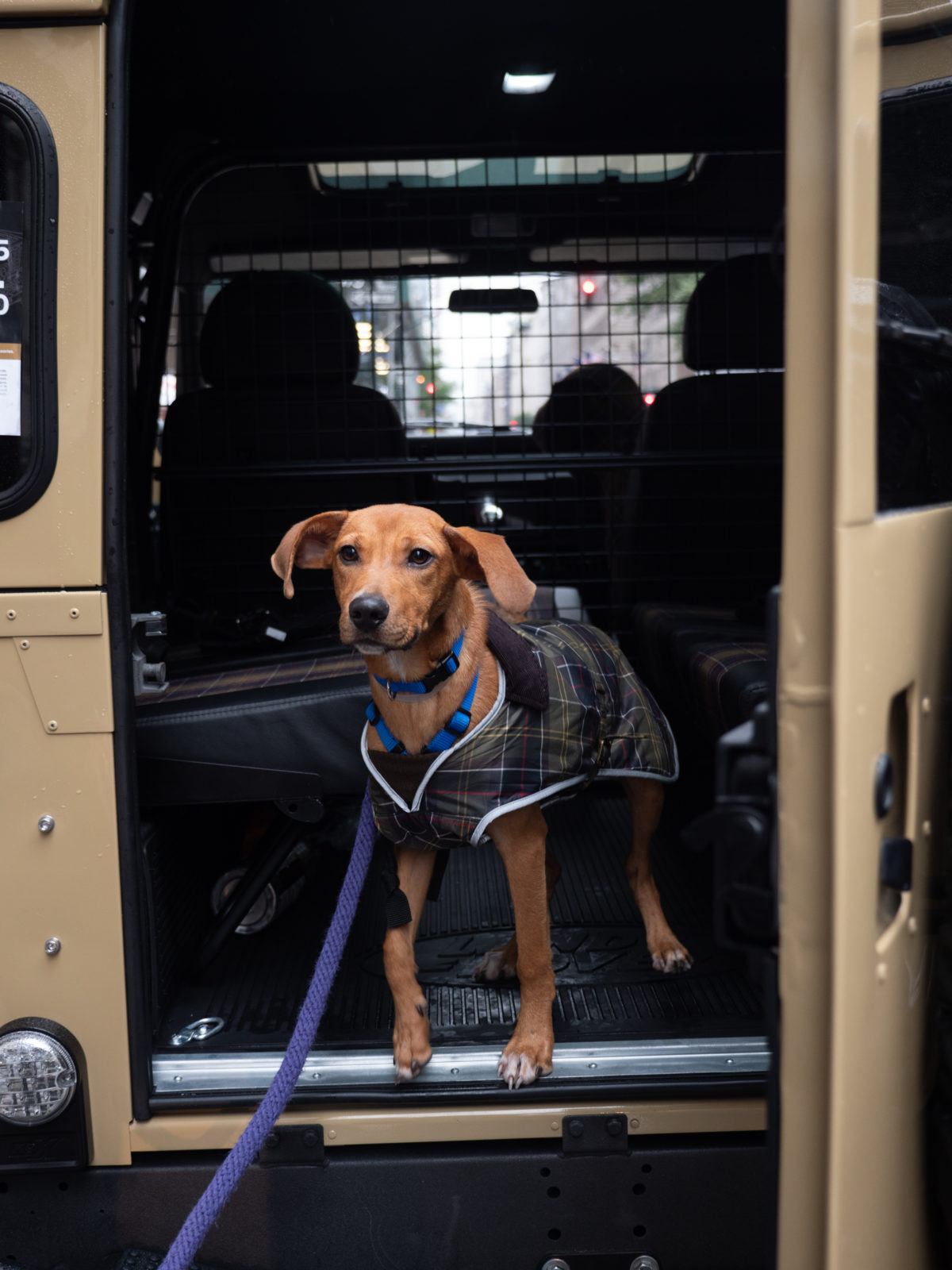 #AdoptARover Road Trip Highlights Dog Adoption